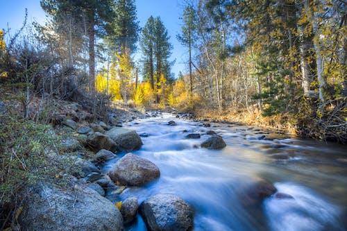 Immagine gratuita di acqua, alberi, boschi, flusso