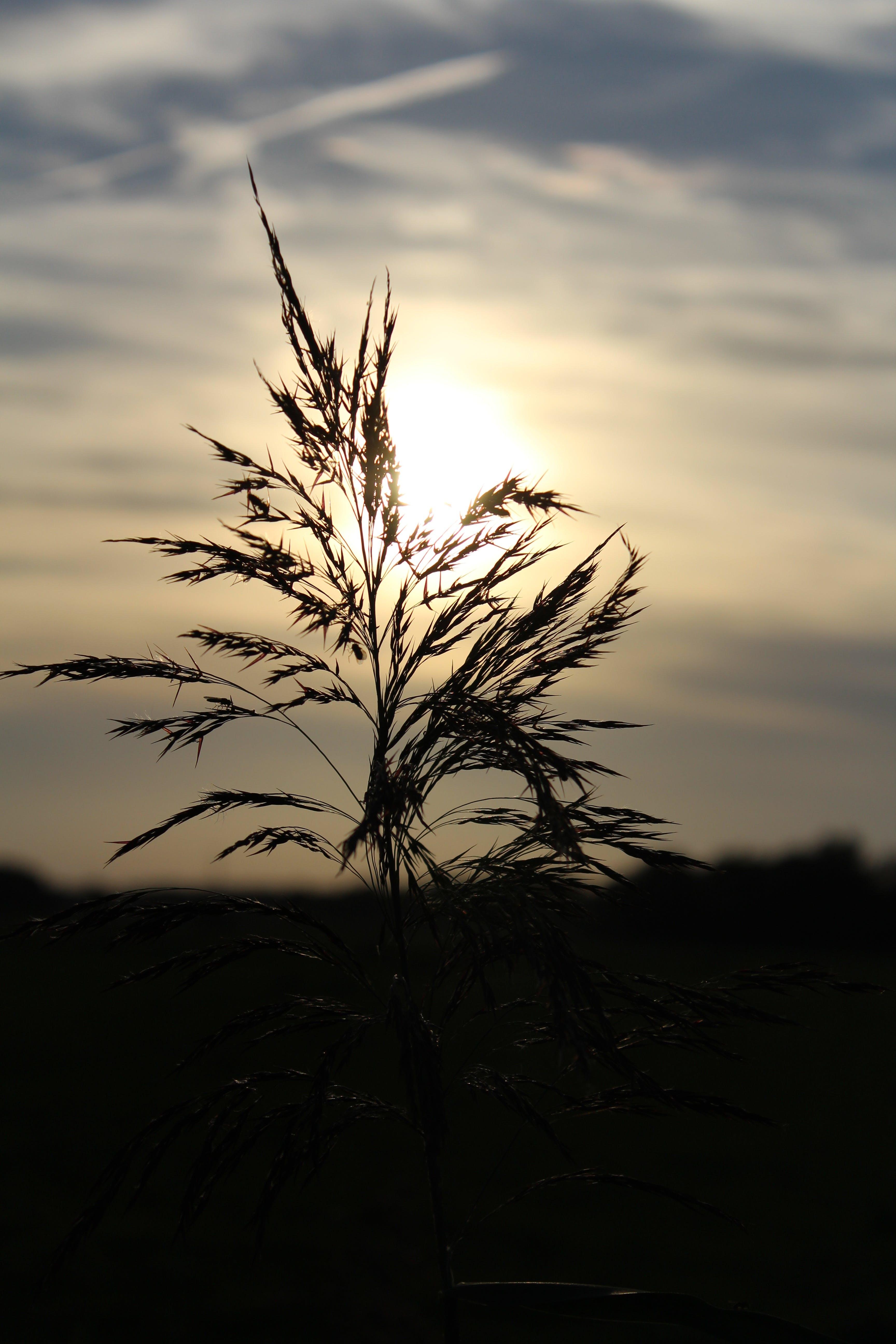 Бесплатное стоковое фото с вечер, вечернее небо, восход, завод