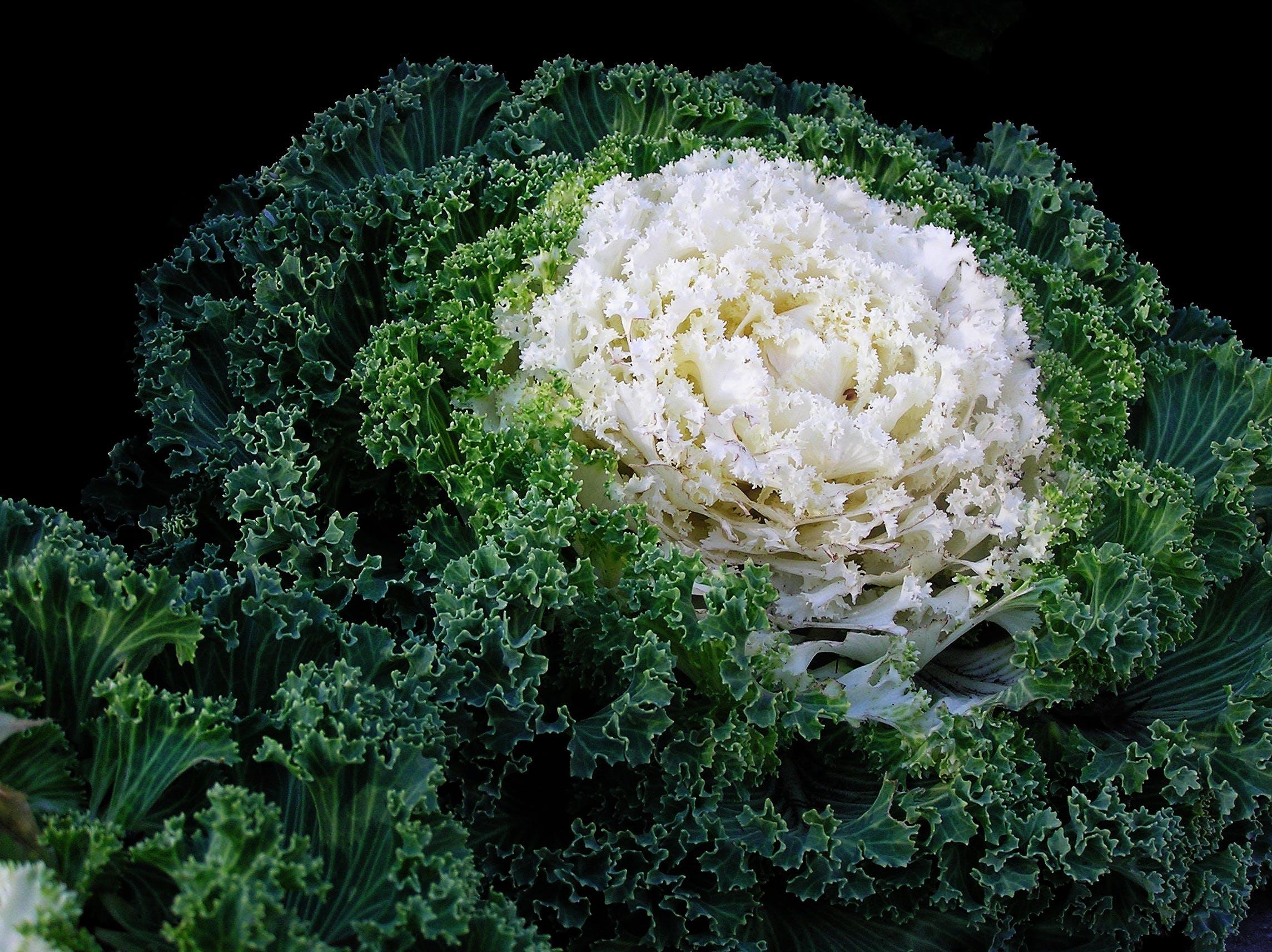 Close-up of Fresh Green Plants