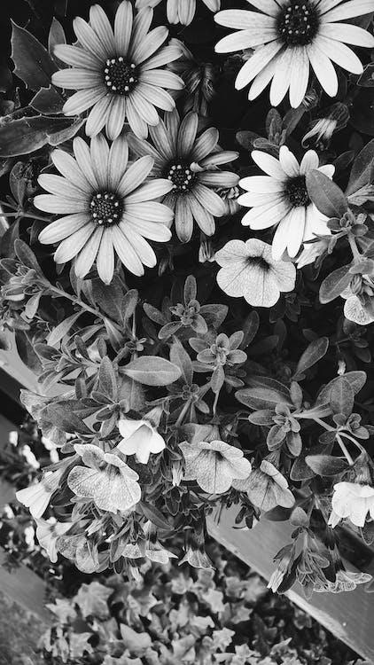blomster, blomstermotiv, bnw