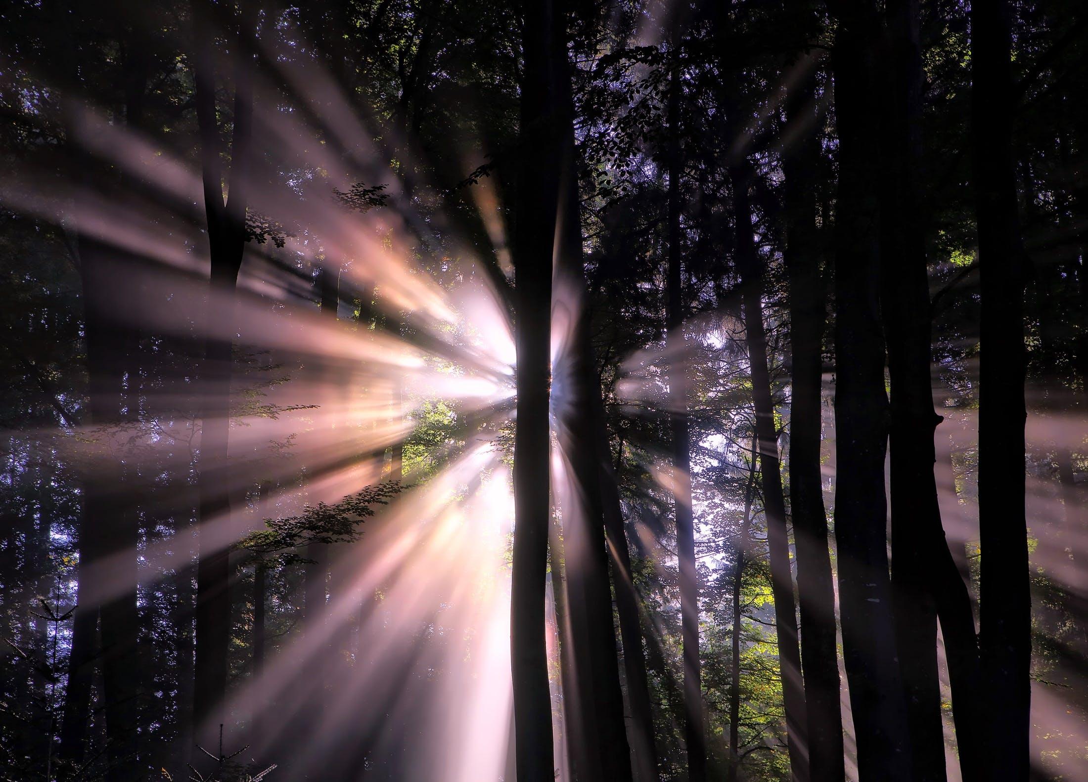 Sun Shining Through Trees at Night