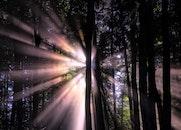 nature, dark, forest