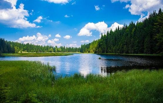 Kostenloses Stock Foto zu natur, wasser, wald, bäume
