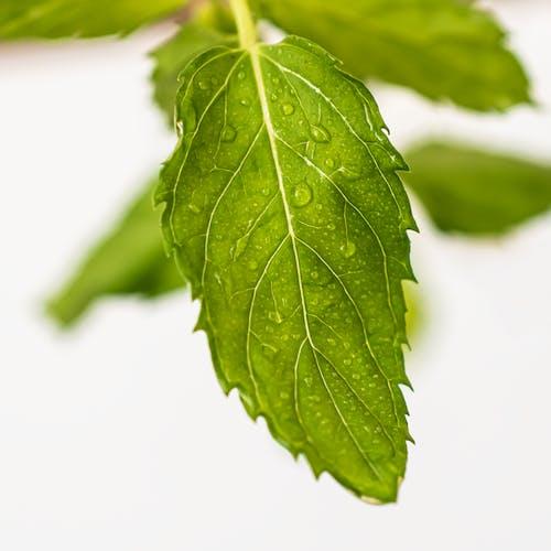 Fotos de stock gratuitas de comida, corazon, hojas, hojas de menta
