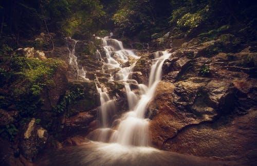 경치, 관광, 물, 밀림의 무료 스톡 사진
