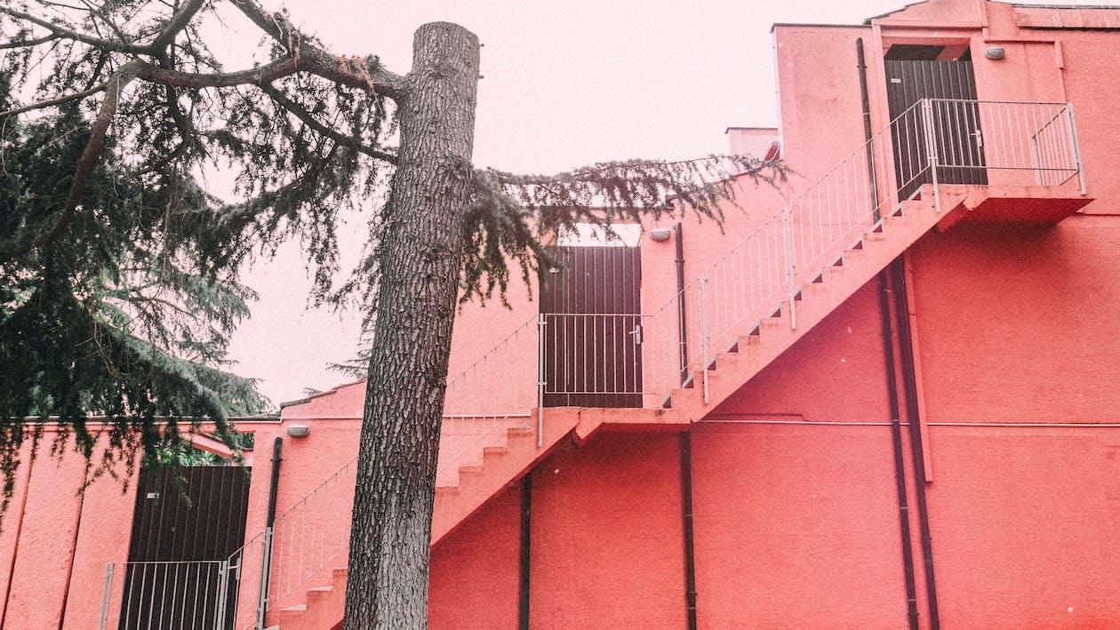 arkkitehtuuri, lehdet, pinkki