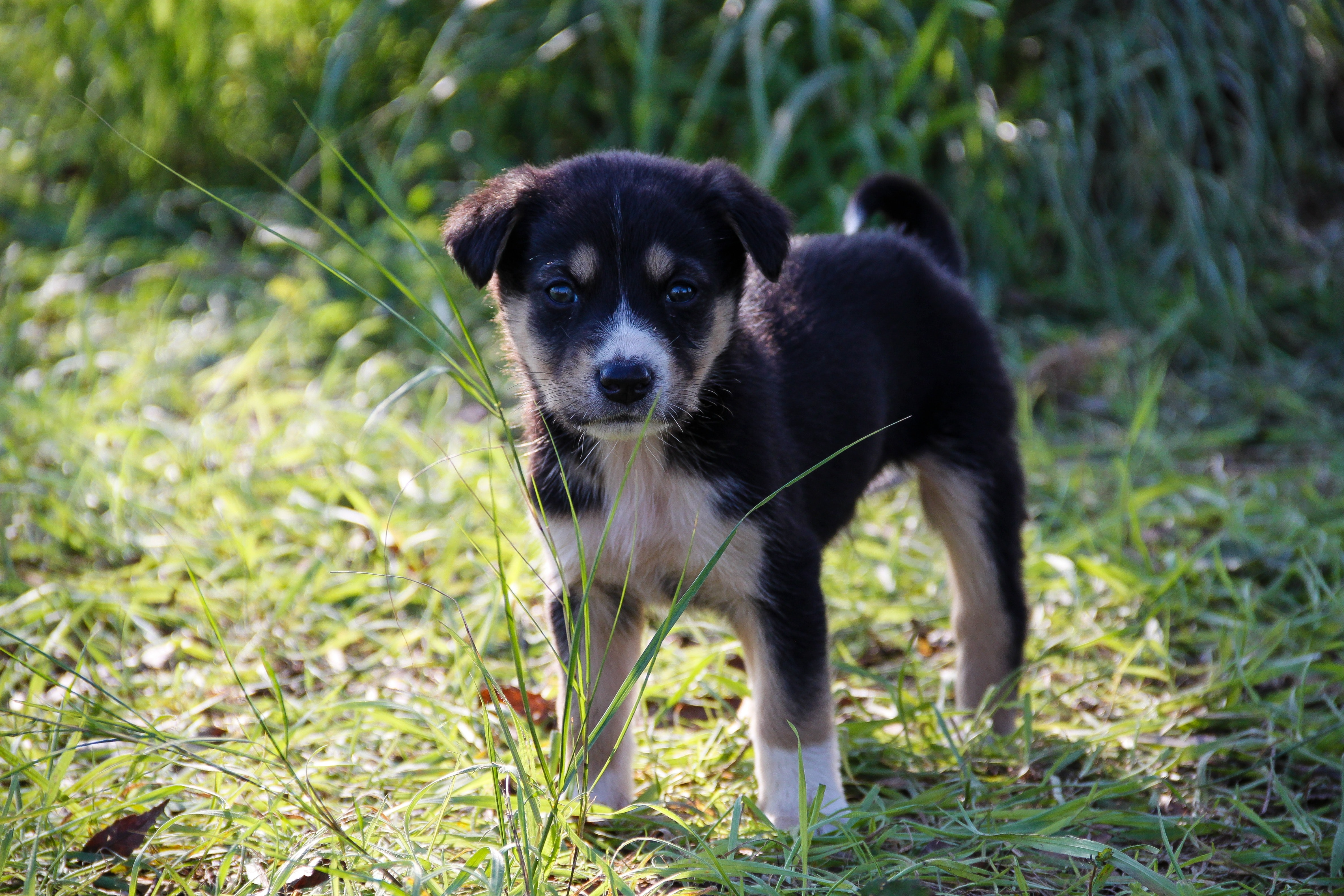 Pictures Of Black White And Brown Dogs