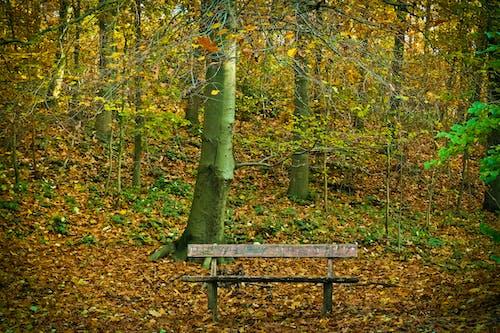 休息, 光, 公園, 分支機構 的 免费素材照片