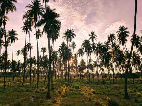 Photo Palm Trees During Golden Hour