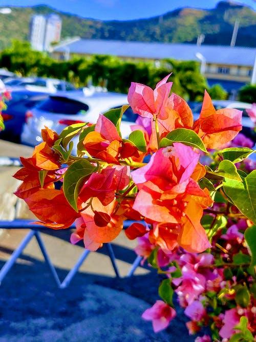 Foto d'estoc gratuïta de bellesa a la natura, colorit, flors boniques, fulles