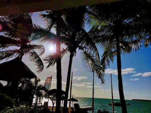 Foto d'estoc gratuïta de bellesa a la natura, fulles de palmera, núvol, Palmera