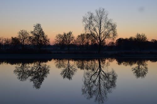 Foto d'estoc gratuïta de a l'aire lliure, aigua, alba, arbres