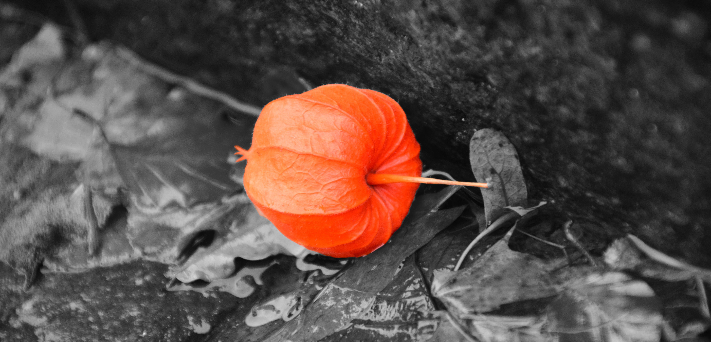 Close-up View of Orange Leaf