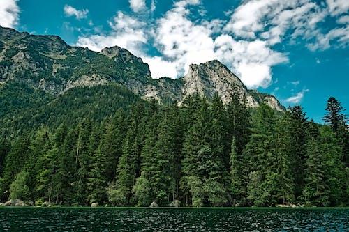 ağaçlar, bakir bölge, dağ, doğa içeren Ücretsiz stok fotoğraf