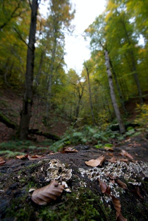 Gratis stockfoto met atmosfeer, bedacht, bladeren, bomen