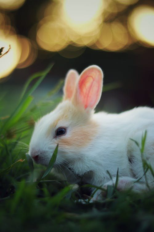 White and Brown Rabbit by Grass