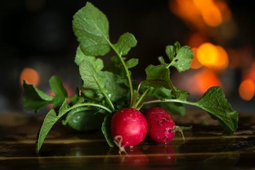 Ingyenes stockfotó aratás, boke, egészséges, fókusz témában
