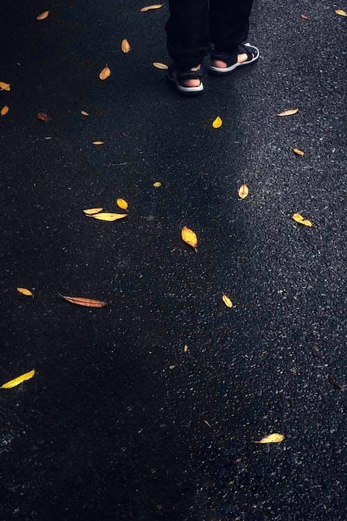 Kostenloses Stock Foto zu asphalt, beine, blätter, dunkel
