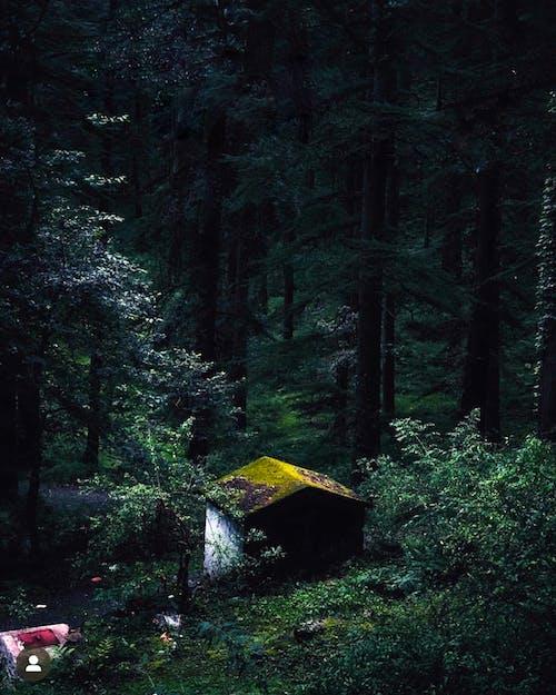 Foto profissional grátis de ao ar livre, árvores, árvores altas, assustador