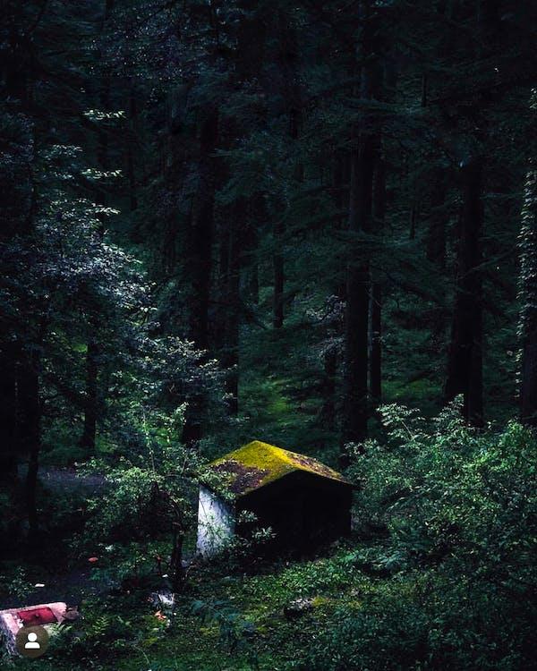 à feuilles persistantes, abri de jardin, arbres