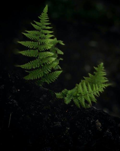 Бесплатное стоковое фото с местоположение, природа