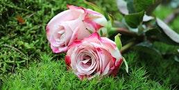 love, romantic, flowers