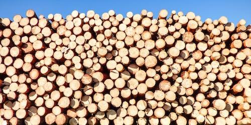 Immagine gratuita di catasta di legna, industria, industriale, legna da ardere