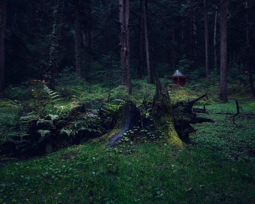 Бесплатное стоковое фото с гималаи, голы, горы, диски