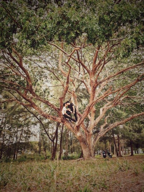 Gratis stockfoto met boomtakken, bossen, buiten, daglicht