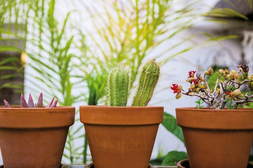 Photo of Three Potted Plants