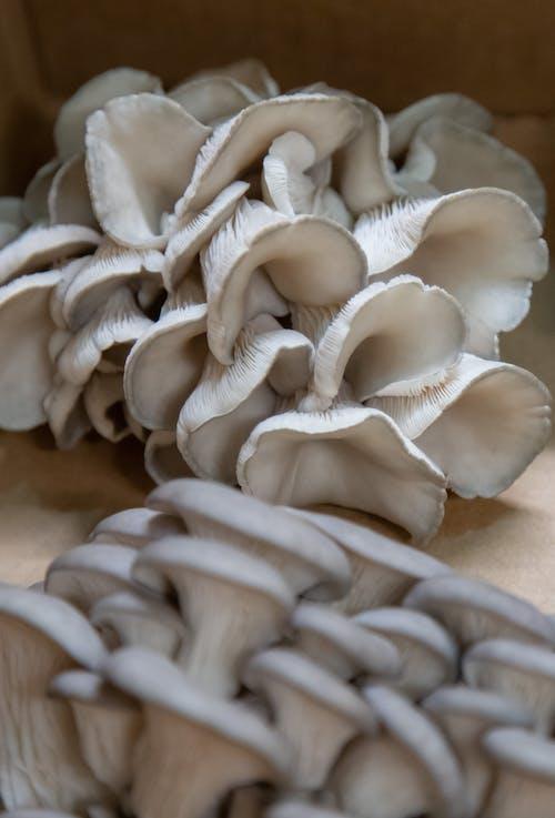 Foto profissional grátis de agbiopix, agricultura, branco, cogumelo