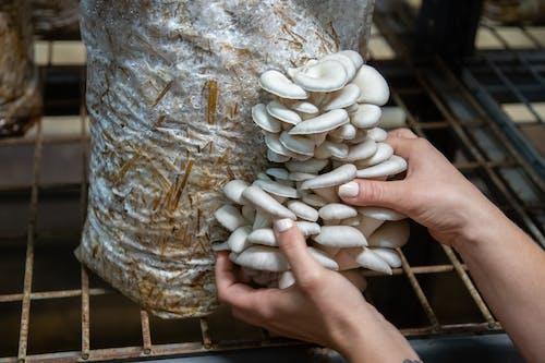 Foto profissional grátis de agbiopix, agricultura, chácara, cogumelo