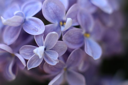Fotobanka sbezplatnými fotkami na tému jar, kvet, kvety, modrá