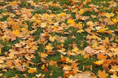 Fotobanka sbezplatnými fotkami na tému farba, farby, jeseň, jesenné lístie