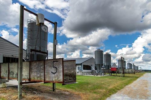 Gratis stockfoto met agbiopix, boerderij, landbouw, schuren