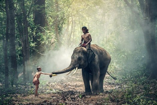 View of Elephant Riding Horse