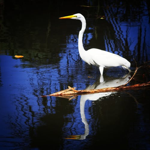 Foto stok gratis #heron #birdwatching #bird #reflection
