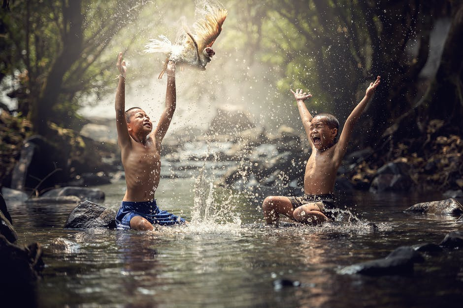 New free stock photo of bird, people, water
