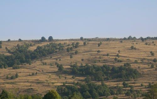 Бесплатное стоковое фото с борозды, вспаханные поля, вспаханный, гора