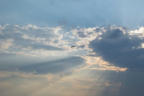 Бесплатное стоковое фото с восход, голубое небо, голубой, летящая птица