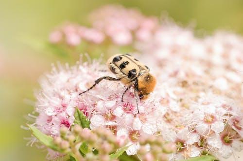 Kostnadsfri bild av artropod, bi, blomma, blommor