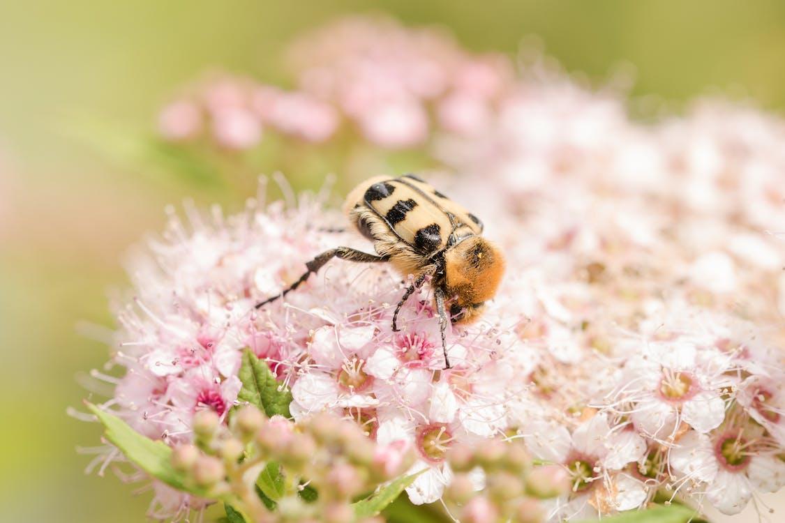 bestøvning, bi, blomster