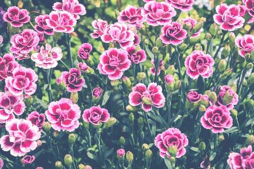 Photos gratuites de arrière-plan, botanique, brillant, centrales