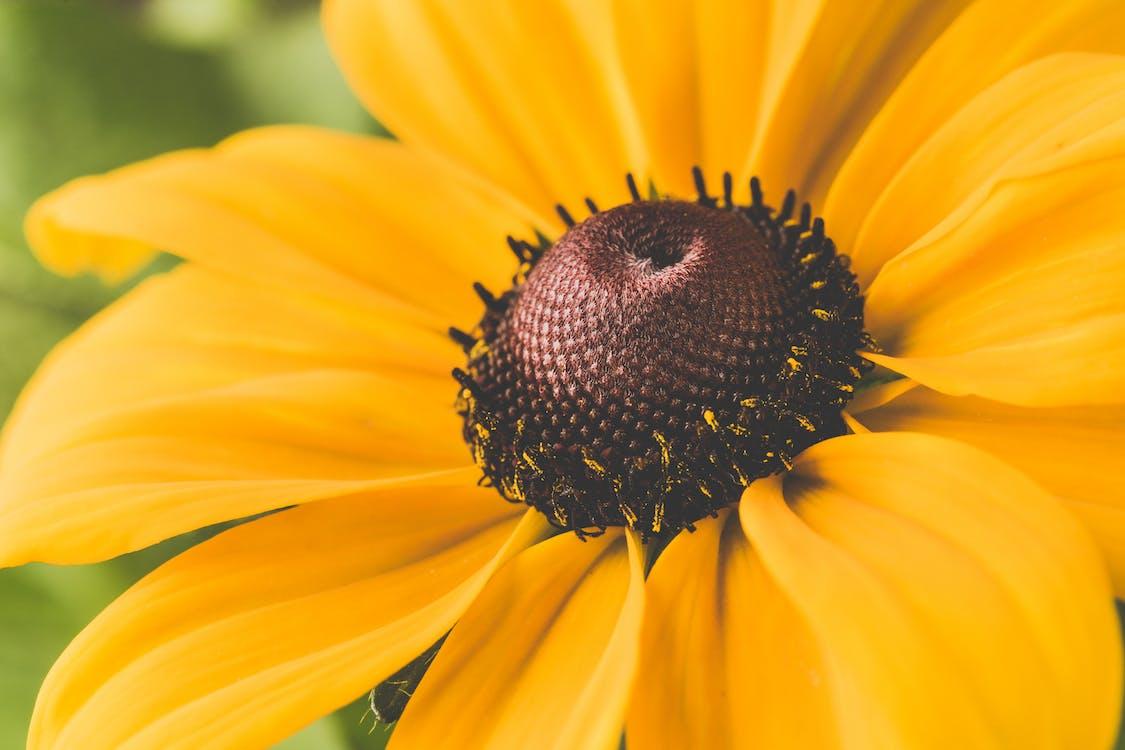 berbunga, berkembang, botani