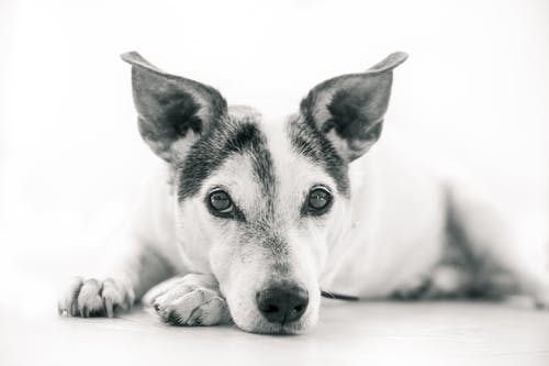 Kostnadsfri bild av däggdjur, djur, hund, hund-