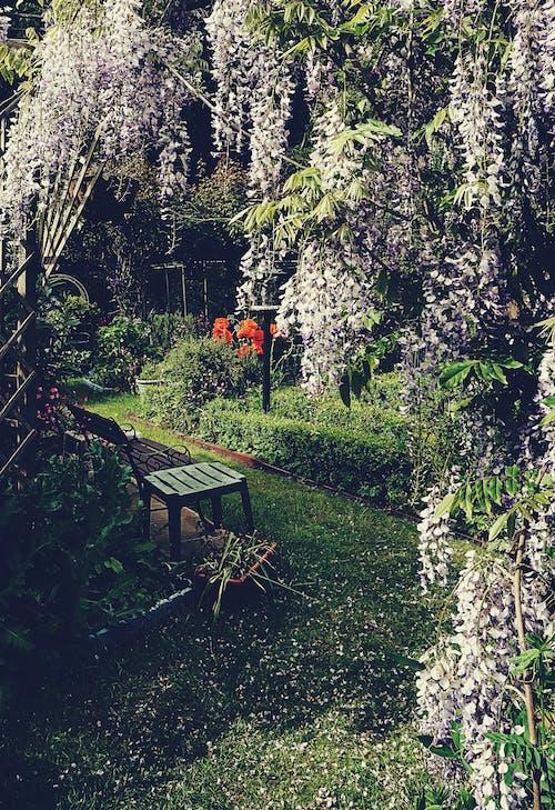 Ilmainen kuvapankkikuva tunnisteilla kasvikunta, kukat, kukkiva puutarha, luonto