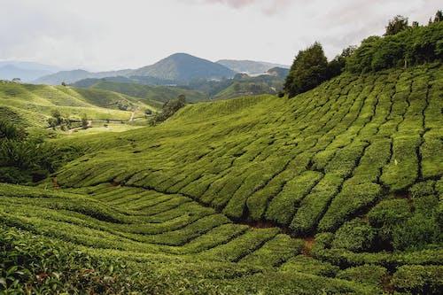 Kostnadsfri bild av åkermark, berg, beskära, bondgård