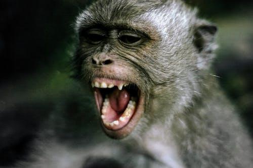 Δωρεάν στοκ φωτογραφιών με άγρια φύση, άγριο ζώο, ζώο, θηλαστικό