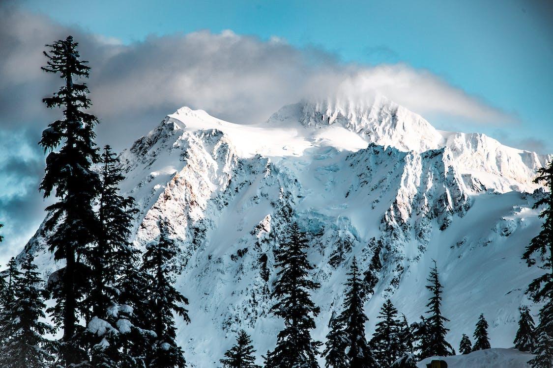 hora, horský vrchol, ihličnany