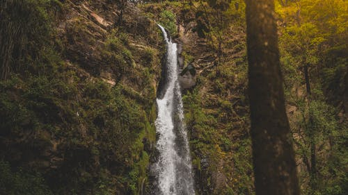 Landscape photo of waterfall in forest